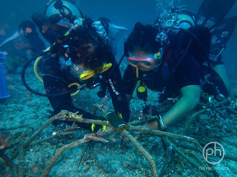 peekholidays-coral planting padangbai bali livingseas